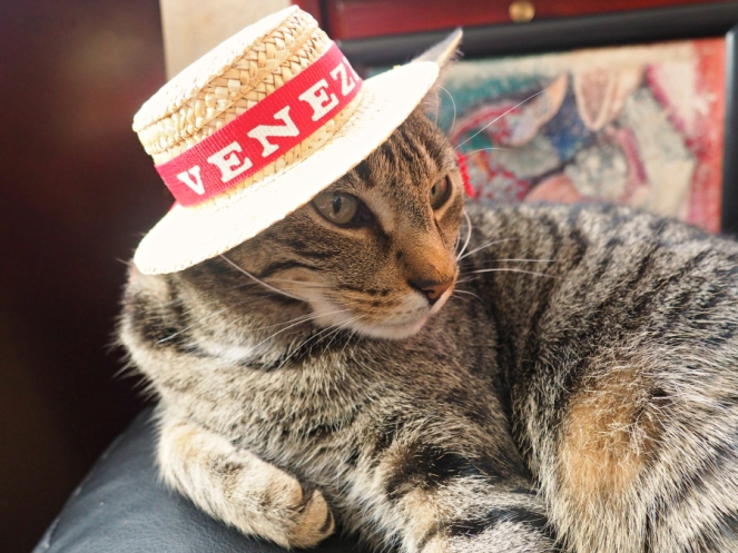 London the Cat in a Venice Straw Gondola Hat