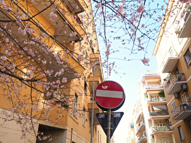 Blossoms in Rome Italy, Travel Blogger