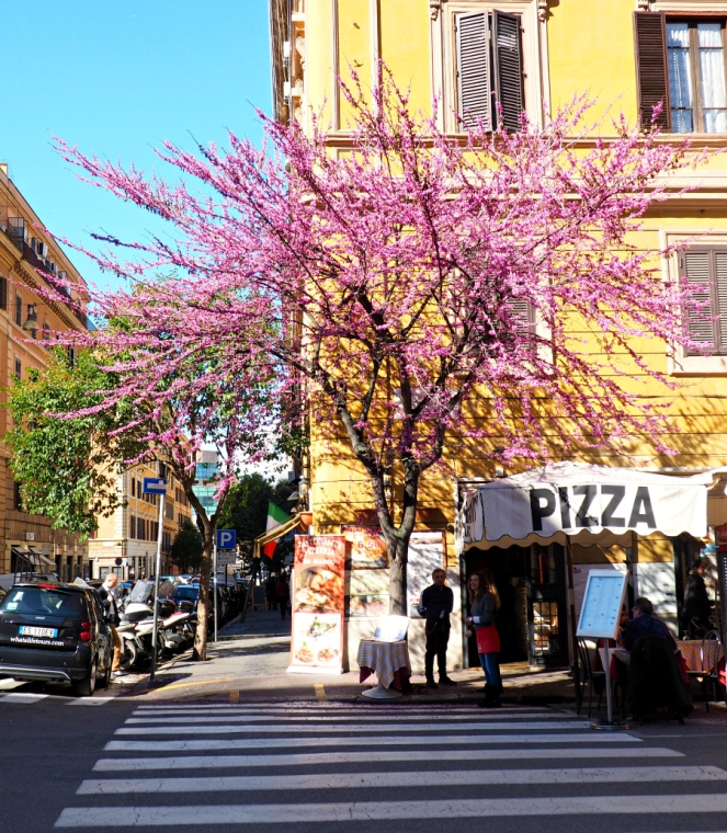 Spring Pink Blossom Tree in Rome Italy, Travel Blogger
