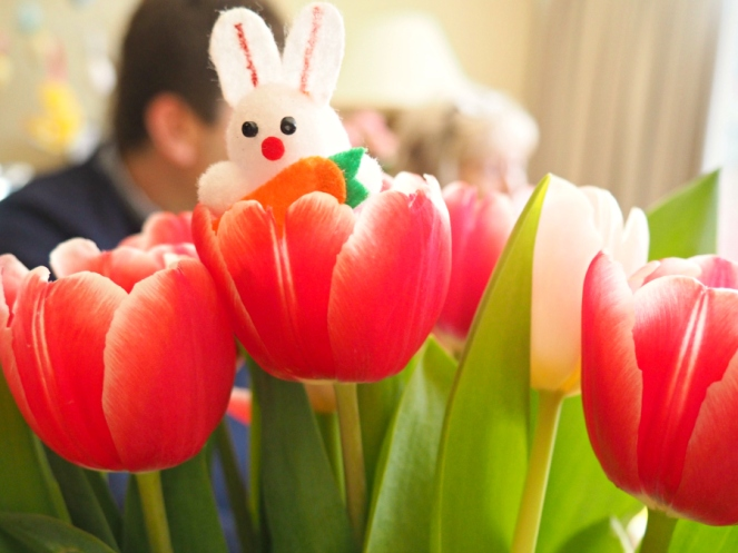 Peekaboo Easter Bunny Rabbit in the Spring Tulips