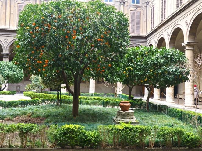 Orange and Lemon Trees in Rome Italy, Travel Blogger