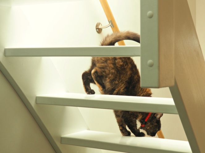 Airbnb Cat in Amsterdam Holland Travel Blogger