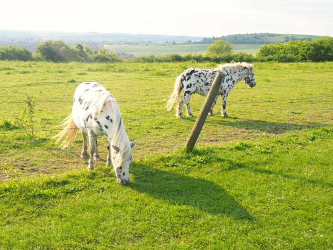 Dalmatian Ponies Luton Summer Pony Horse Green Grass Travel Blogger