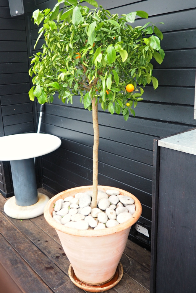 Orange Tree at the Blogger Breakfast with Farfetch at Boundary Rooftop in East London