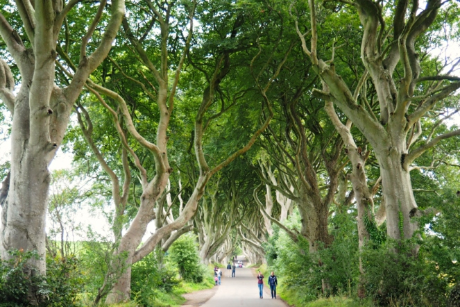 Dark Hedges Nothern Ireland Game of Thrones