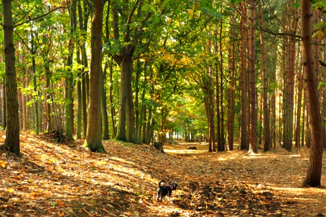 Rushmere Country Park Nature Forest Walk