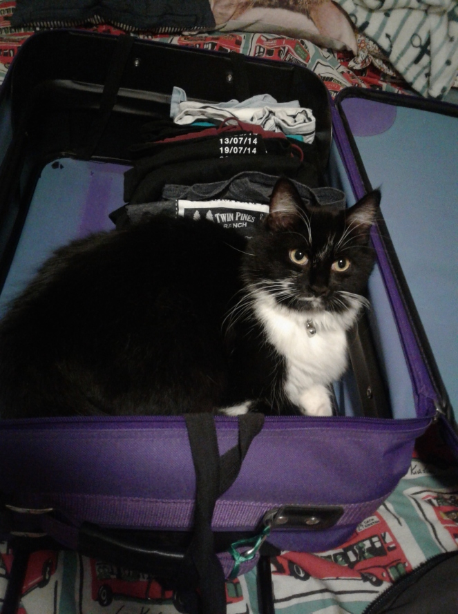 5 Moving House In London with Oreo the Cat